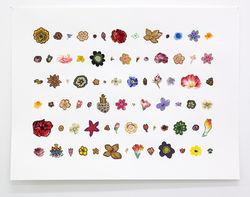Elisabeth Westerlund work