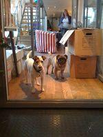Bemz dogs