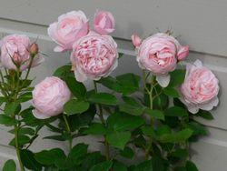 Le 33 flowers