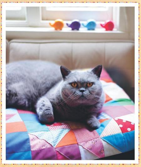 Bronte's cushion