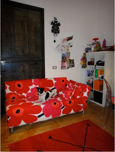Argo the dog on a Marimekko Unikko Red sofa cover from Bemz