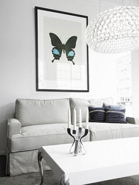 Papilio Paris gedeensis Butterfly Print